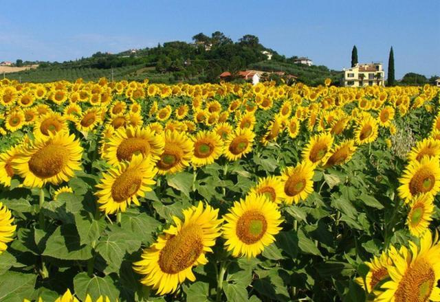 Học tiếng Nhật về chủ đề thế giới loài hoa