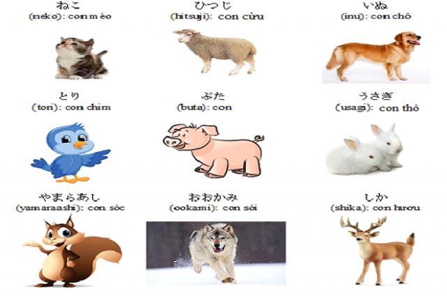 Học từ vựng tiếng Nhật  theo các chủ đề quen thuộc