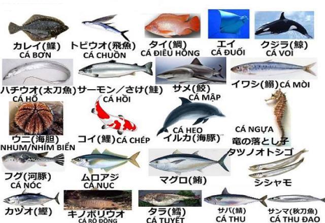 Tổng hợp 50 từ vựng tiếng Nhật về các loại cá và hải sản.